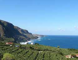 Bananenplantagen an der Nordküste von Teneriffa